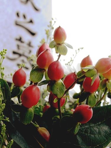 Flower-050