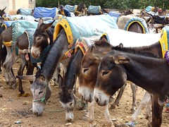 The parking at Asni market (Frans.Sellies) Tags: morocco maroc marokko asni المملكةالمغربية المغرب