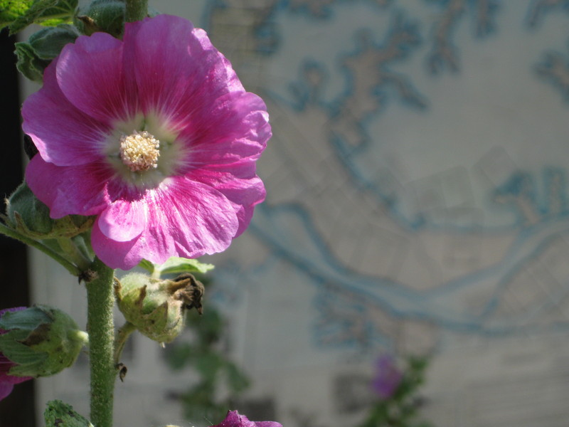 Flower and Map