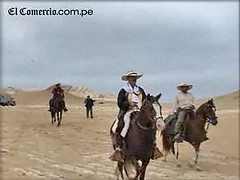 Peruvian Paso horses set off on journey to Lima