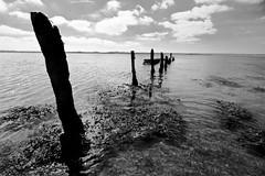 Wexford Estuary (harkness_john) Tags: blackandwhite bw sticks estuary poles wexford bwdreams