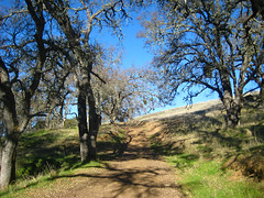 Scrub oak  Photo