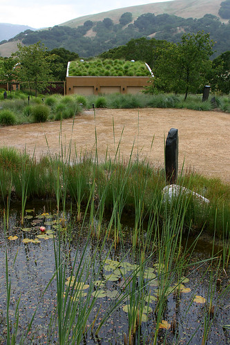 pond and green roof