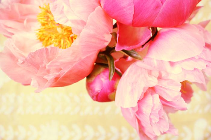 *pink peonies*