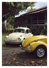 17_02_05_187p (2) (Quito 239) Tags: käfer volkswagen 1971volkswagen 1971volkswagensuperbeetle superbeetleconvertible vw bug vocho escarabajo puertorico haciendaigualdad volky