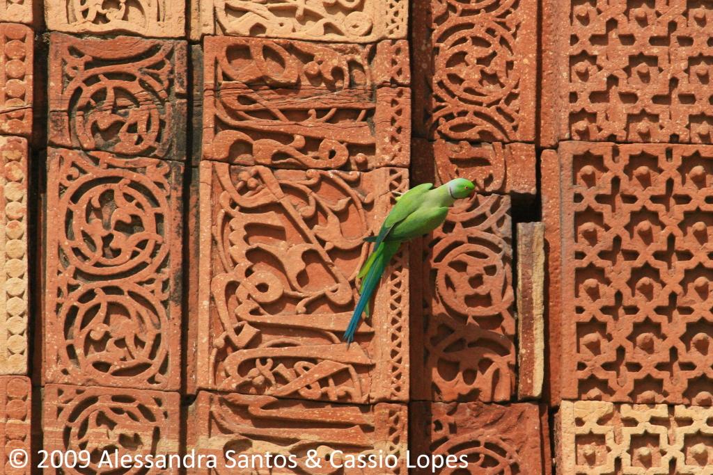 Qutab Minar IMG_0315_F