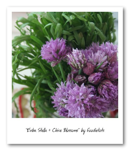 erba stella chive blossoms spring herbs