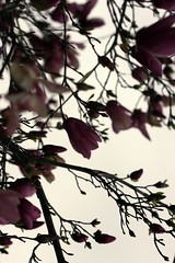 (*Qatar) Tags: flowers spring purple