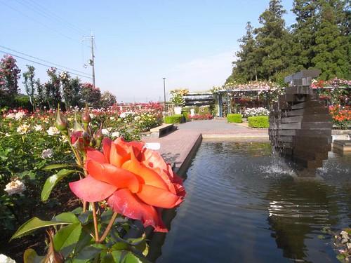 霊山寺「バラ庭園」@奈良市-05
