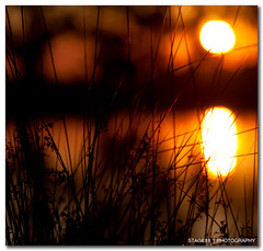 Everywhere Is Walking Distance If You Have The Time (Sam Ili) Tags: sunset sun color reflection grass silhouette canon pond soft harrison bokeh australia canberra gungahlin 450d canberrasunset redbubble canon24105mm4