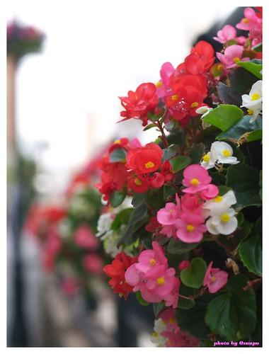 Horikawa Flower Festival 20090327 #04