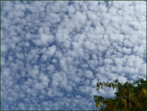 little fuffy clouds