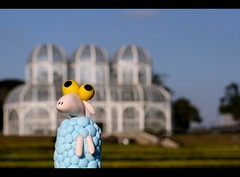 Sheep went to the Jardim Botnico (Honey Pie!) Tags: brazil paran brasil toy brinquedo sheep explore curitiba jardimbotnico ameliepoulain botanicalgarden madebyme toyland poulain ovelha amliepoulain feitopormim explored jardimbotnicocuritiba sheepinthebigcity botanicalgardencuritiba sheepnacidadegrande sheepinthebigcitywenttothebotanicalgarden sheepnacidadegrandevaiaojardimbotnico