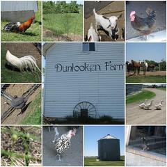 Dunlooken Farm