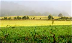 7:39 AM (Cliff Michaels) Tags: trees light sunlight mist green grass photoshop d50 dawn nikon tennessee easttennessee capturenx