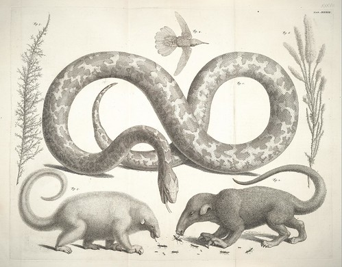 anteaters and snakes