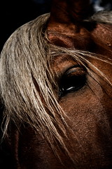 (JUANCAICEDO) Tags: park parque sky horse brown tree grass animal forest fur arbol caballo colombia bogota university legs farm alimento pony bosque cielo universidad blonde feed granja hierba rubio