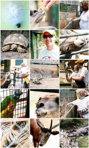 Alabama Gulf Coast Zoo 07-15-09