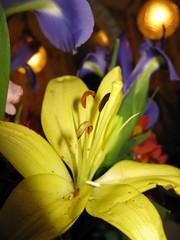 Do you really love any body as much as yourself?_8141 (jaciii (off&on)) Tags: flowers friends flower flowersflowersflowers mywinners soocstraightoutofcamera elshowdelmacro theshowofthemacro myyellowworld phoddastica allflowersofearth betterthantheirbests unforgettableflowers soocforinterestedelitepurists sfcstraightfromcamera haveyouarrangedyourlife doyouhurtotherswhy doyouignoreothersneeds doyouhateotherswhy doyougossipothersreputation doyoulietoge