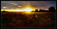 Gold of The Great Plain / Az Alföld aranya (FuNS0f7) Tags: sunset hungary szolnok sonycybershotdscf828 the4elements alcsisziget