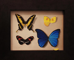 Butterfly Case 13x16 (Lee Alban) Tags: painting butterflies oil realism fooltheeye stilllifetrompeloeil