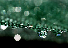 Green Drops (linlaw39) Tags: life macro green nature wet water weather closeup sparkles scotland drops interestingness interesting gallery shine bokeh vibrant september sparkle refraction raindrops colourful waterdrops sparkling supershot competitionwinner colorphotoaward concordians 090909 waterdropsmacros artofimages creativeyeuniverse thebestofmimamorsgroups bestcapturesaoi magicunicornverybest magicunicornmasterpiece mostinterestingnovember09 linlaw39