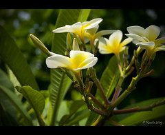 Simplicity (Roszita) Tags: flower macro botanicalgardens shiningstar heartsaward scarletrose77 roszita