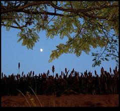 Astre Ether (Agnès Willette (noushka7)) Tags: lune culture nuit couleur lumières gers sudouest midipyrénées feuillage panasonicfz28