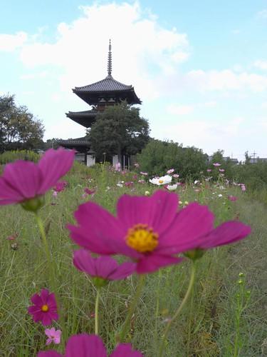 法起寺三重塔とコスモス-07