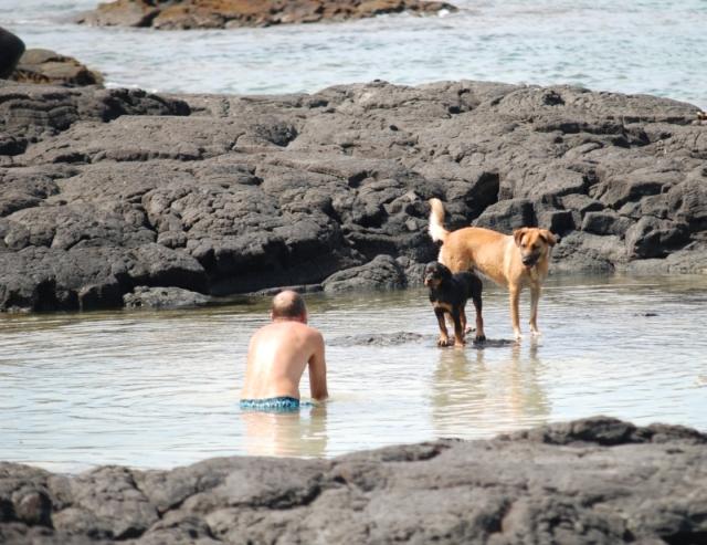 dogswimlesson_small