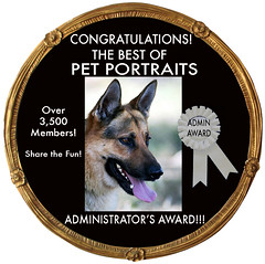 ADMIN AWARD CODE 2 Bottom text removed Dog