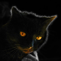 Glow in the dark_IMG_8596 (jobcibi) Tags: light black animal cat canon dark square eyes glow gelb katze augen cica llat schwarz fny fekete srga colorselection abigfave canonpowershotsx110is 1001nightsmagiccity