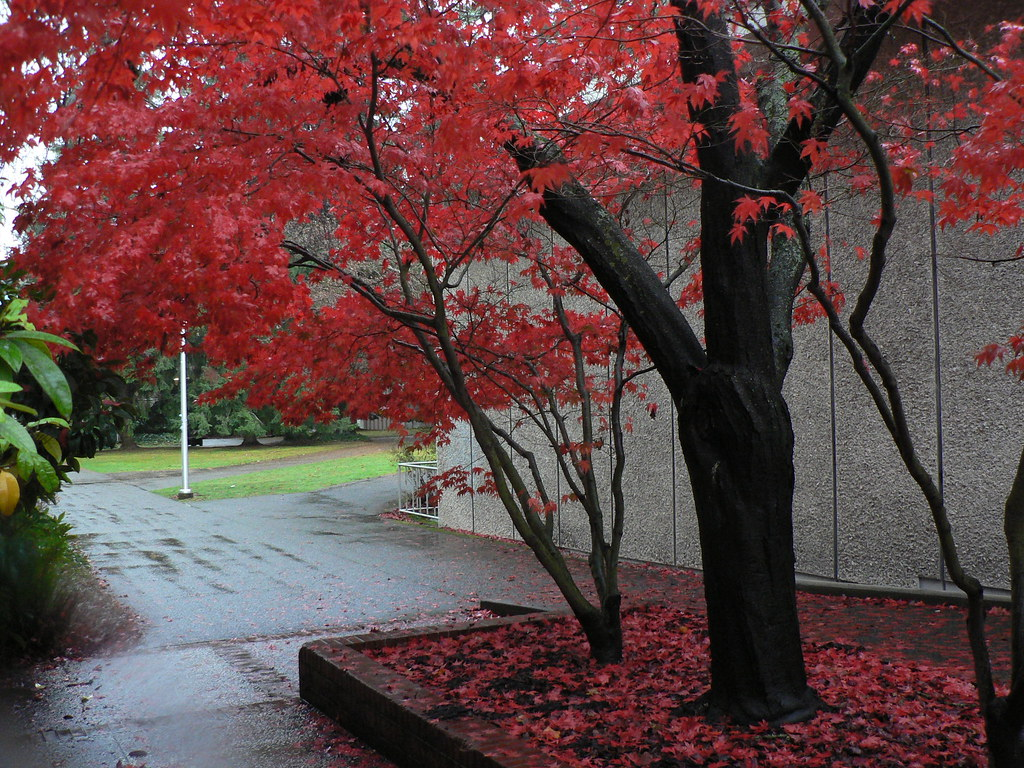 Beautiful Autumn at UVIC