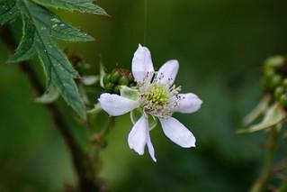 Blooming (In Explore)