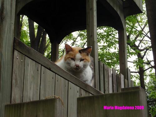 Cat20090522