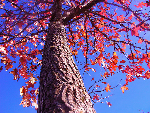 Blue, Red and Tree.