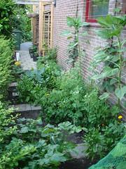 De moestuin, voorjaar 2008