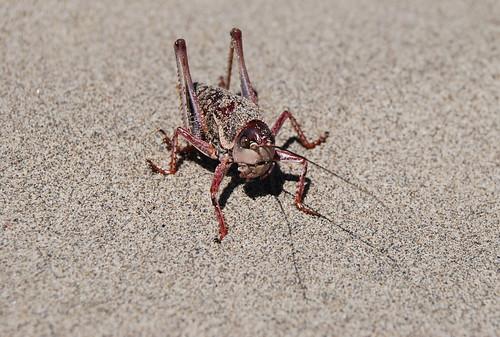 11 - Grasshopper Front