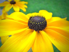 Follow the Leader (Jenn (ovaunda)) Tags: green yellow sony potofgold dsch5 jennovaunda ovaunda