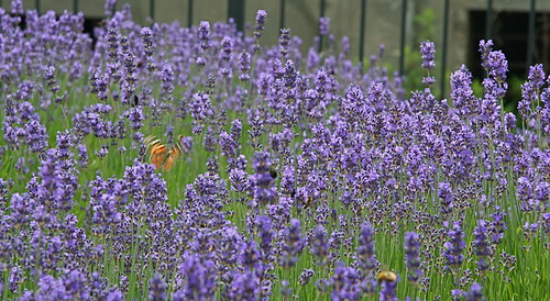 Pollinator Heaven