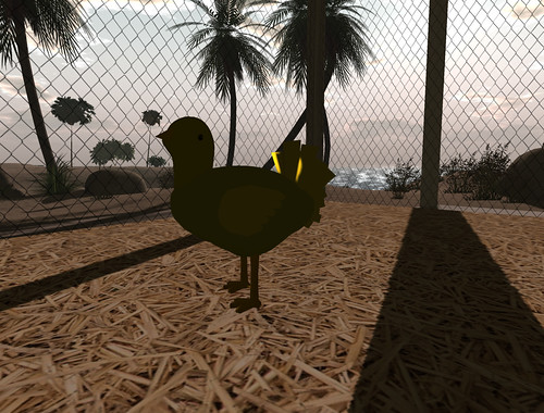 chicken-with-shadows-02