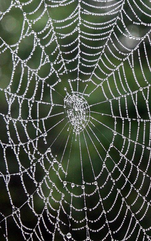 Dew ladened Spider web