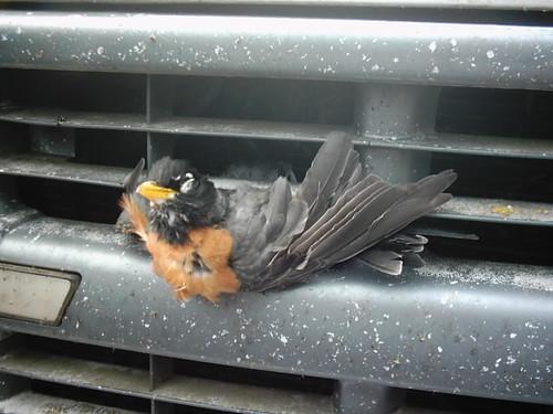 Bird, meet grille