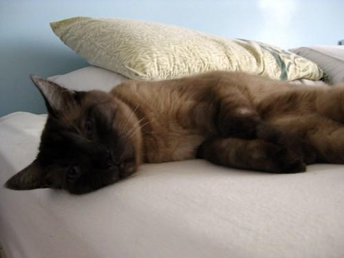 Koko Sleepy Head