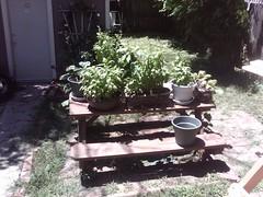 Beans proof garden