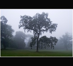 Misty Tree - Camperdown Park - Dundee Scotland (Magdalen Green Photography) Tags: green scotland dundee camperdownpark mistytree dsc3326 coolnature iaingordon