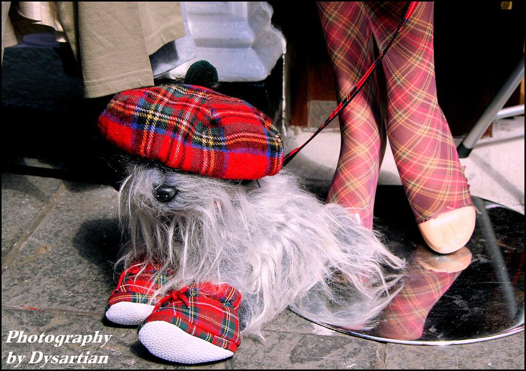High Fashion for Scotty Dogs (Wee Jock Models Royal Stewart Modern tartan)