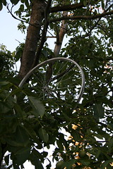 IMG_7125 (wittco.gmbh) Tags: bike bicycle portland clevercycles metrofiets keepyourforktherespie sundayparkways2009