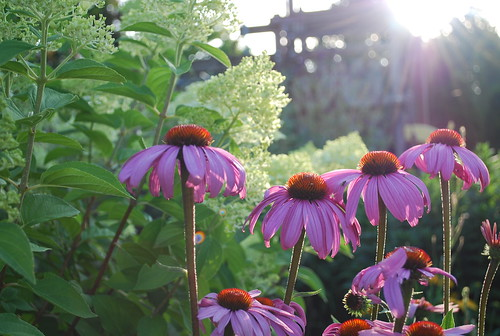 Garden at Morning Light (9)