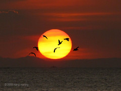 Fly Away Home (mang M) Tags: sunset sun sol philippines bayarea moa filipinas seabirds pilipinas flyinghome pinoykodakero mangmaning2000